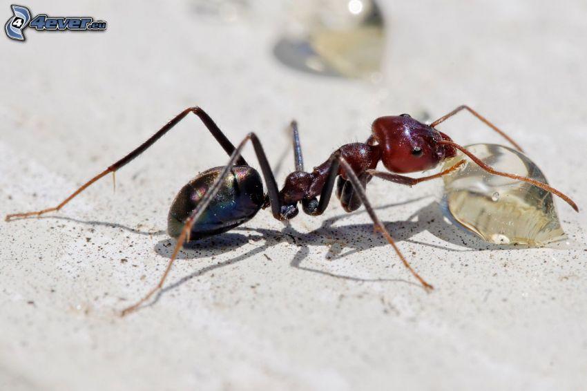 myra, vattendroppe