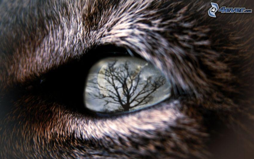 öga, varg, spegling, siluett av ett träd