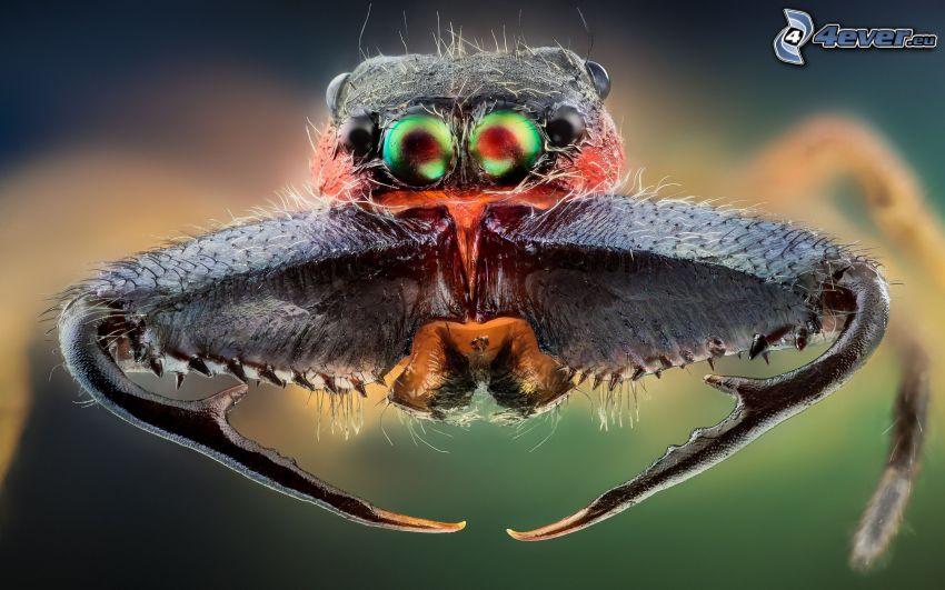 spindel, ögon, makro