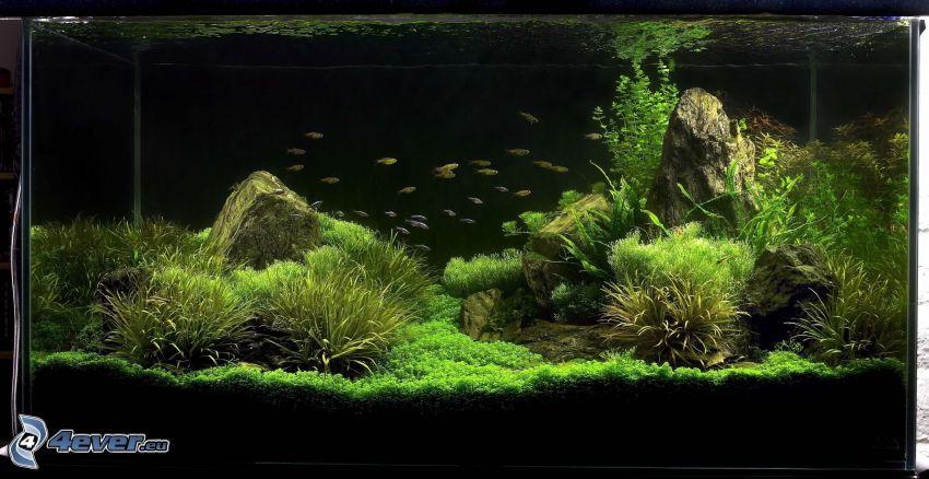 akvarium, fiskar, växter, belysning