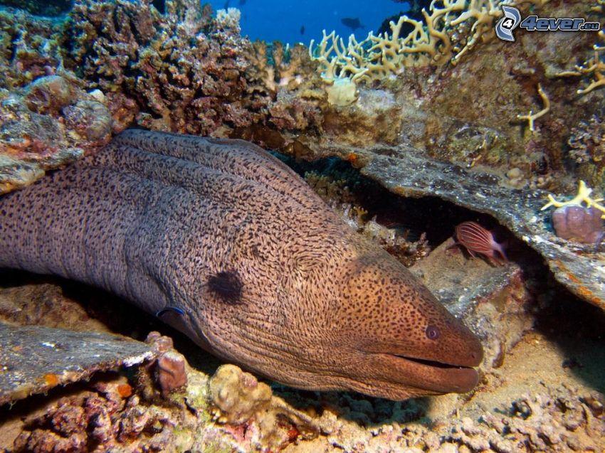 ål, havsbotten