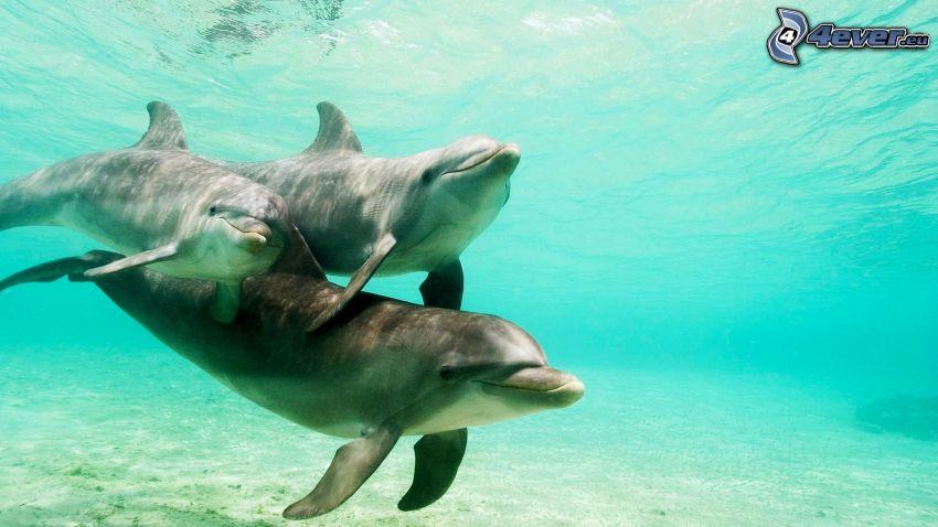 delfiner, azurblå hav