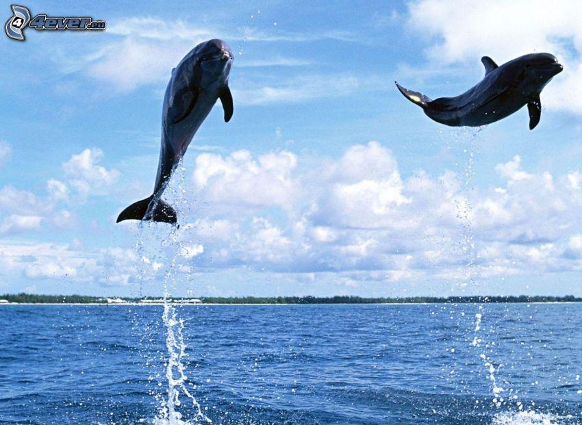 delfiner, hopp, vatten