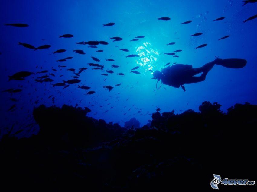 dykare, fiskar, havsbotten