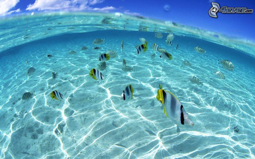 fisk i grunt hav, azurblå hav