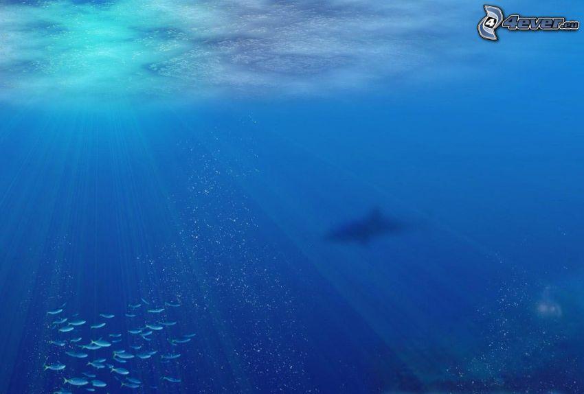 fiskar, haj, solstrålar, blått vatten