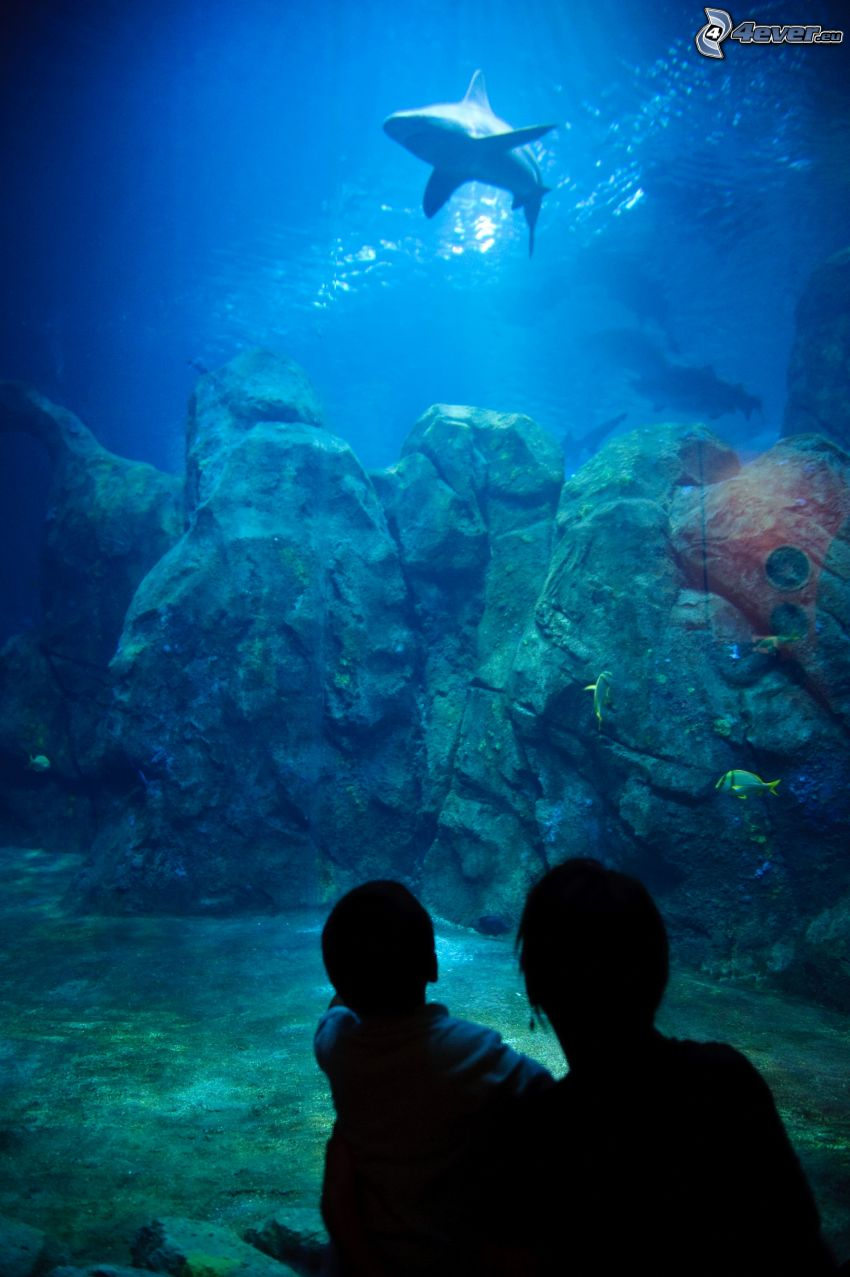 haj, Adventure Aquarium, Camden, New Jersey