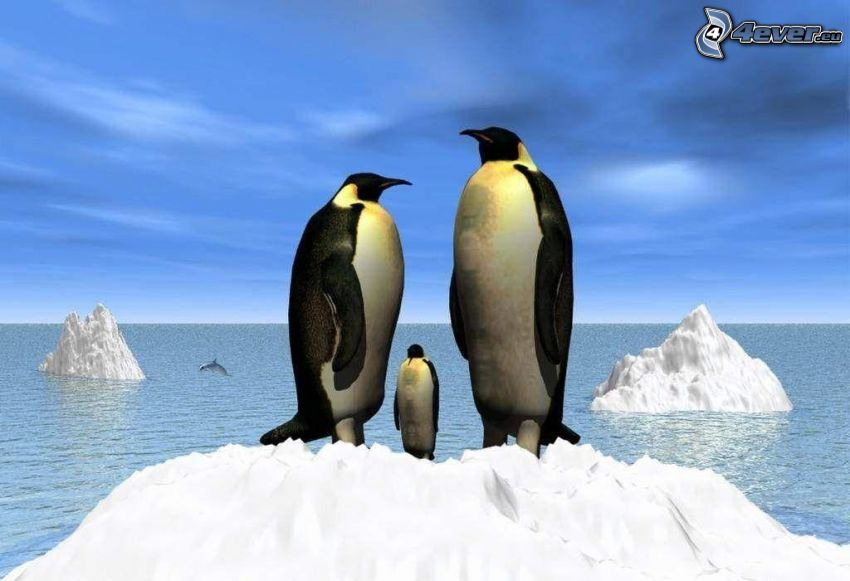 pingviner, hav, glaciärer