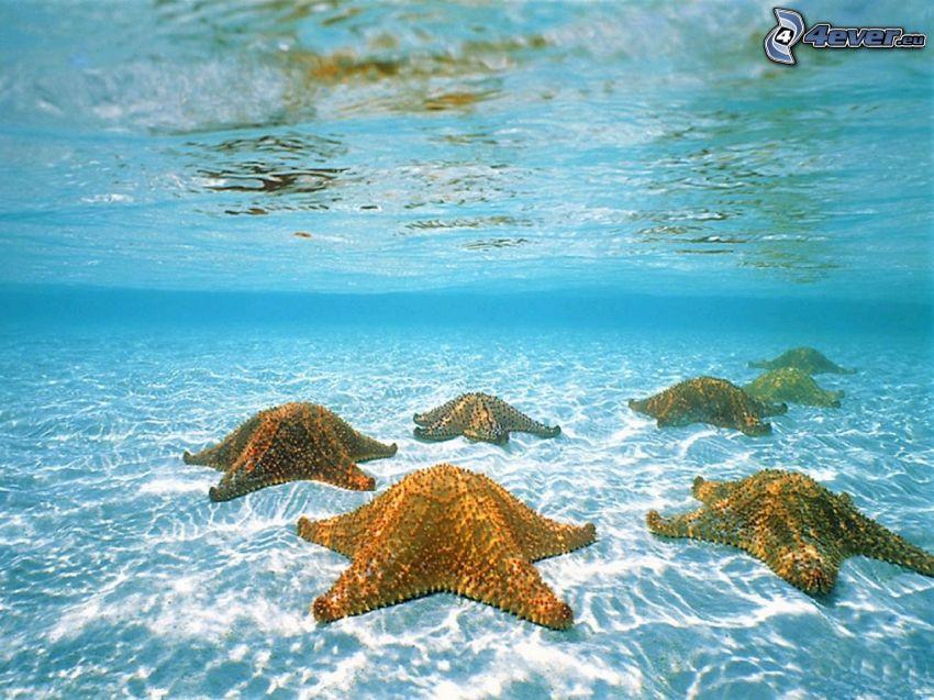 sjöstjärnor, azurblå hav, botten, vatten