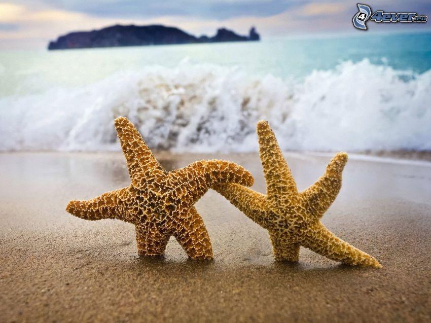 sjöstjärnor, sandstrand, vågor vid kusten, hav, ö
