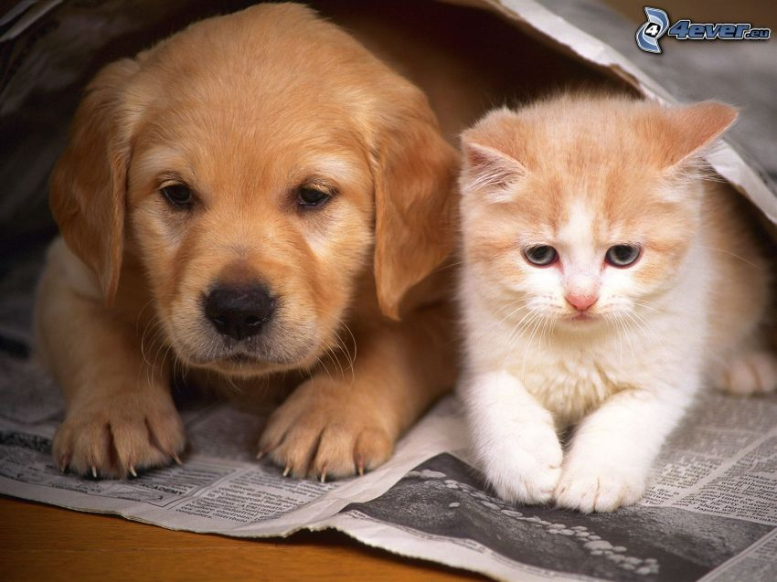 valp och kattunge, tidning