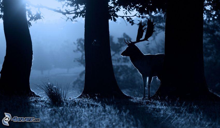 älg, silhuett, mörk skog