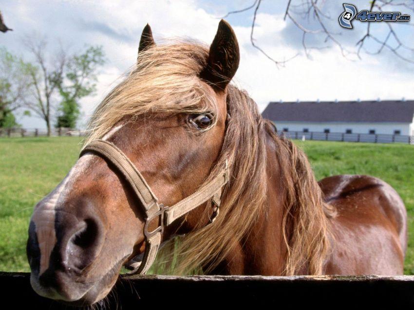 brun häst, trästaket, ranch