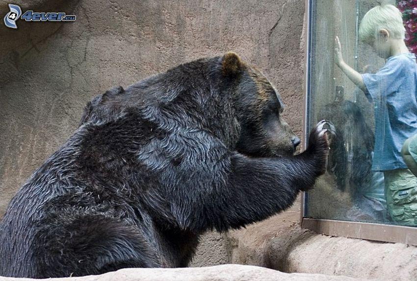 brunbjörn, barn