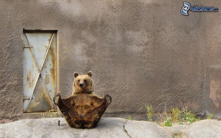 brunbjörn, tassar