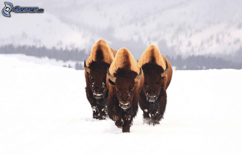 byvoly, snöigt landskap