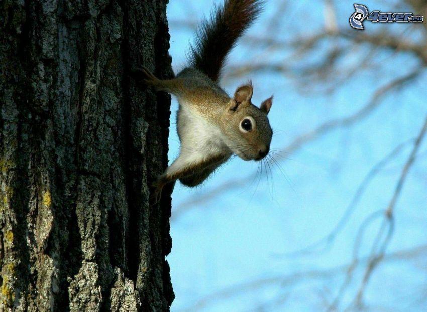 ekorre på träd