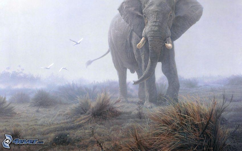 elefant, åker
