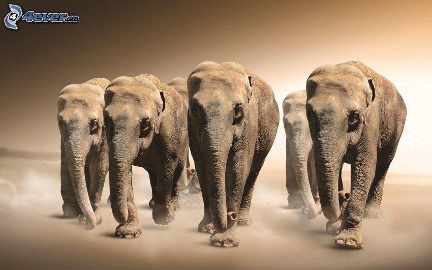 elefanter, ungar