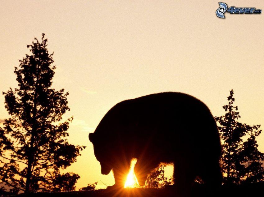 grizzlybjörn, silhuett, sol, siluetter av träd