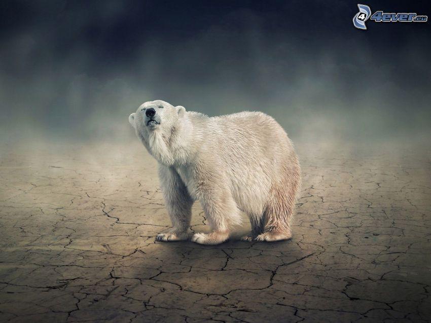 isbjörn, torr jord