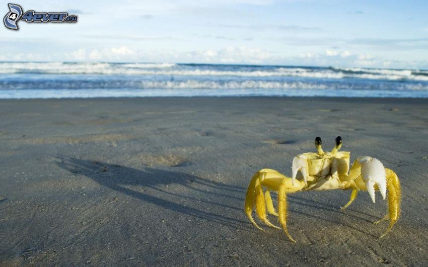 krabba på strand, sandstrand