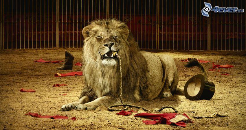 lejon, cirkus