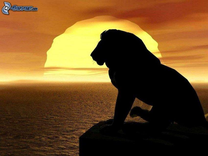 lejon, silhuett, solnedgång, hav
