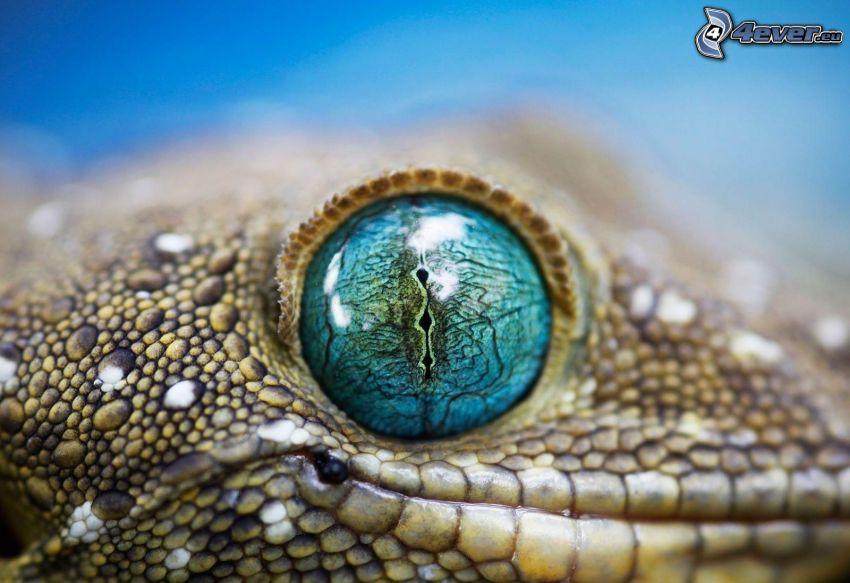 Leopardgecko, öga