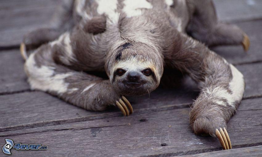 sengångare