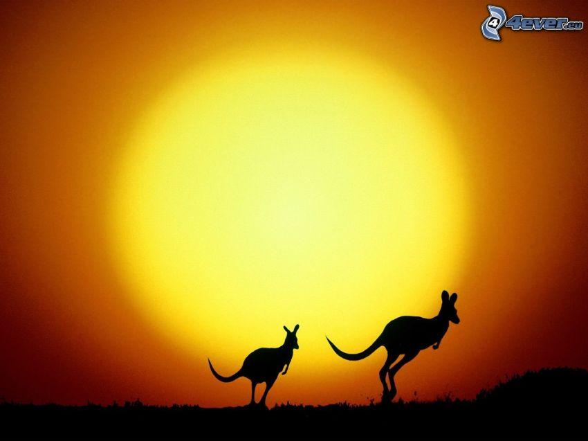 silhuett av känguru, kängurur, skinande orange sol