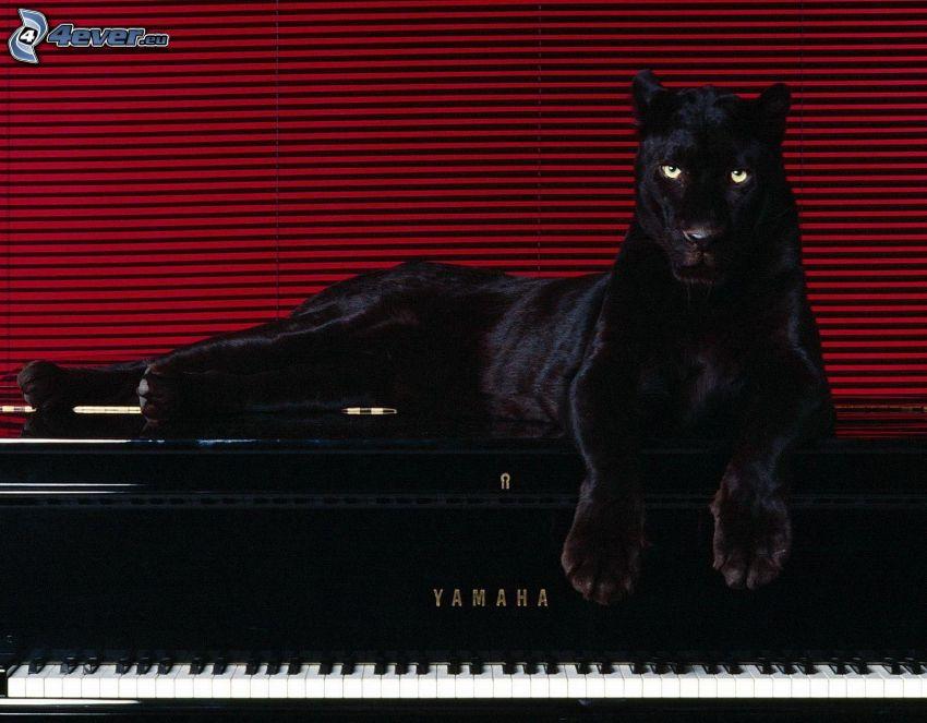 svart panter, piano