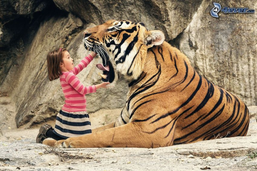 tiger, flicka, käftar