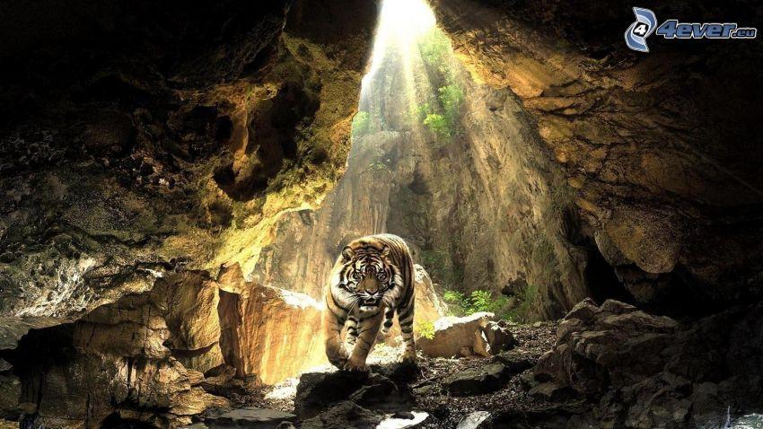 tiger, grotta