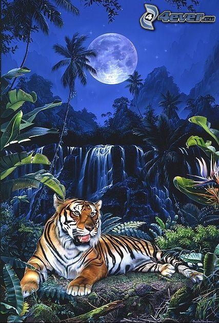 tiger, natt, måne, vattenfall