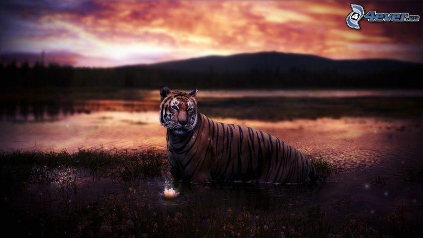 tiger, sjö, bergskedja