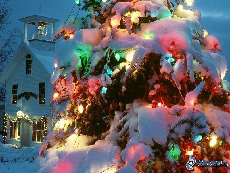 julgran, färggrann belysning, jul, vinter