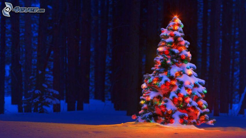 julgran, skog, snö