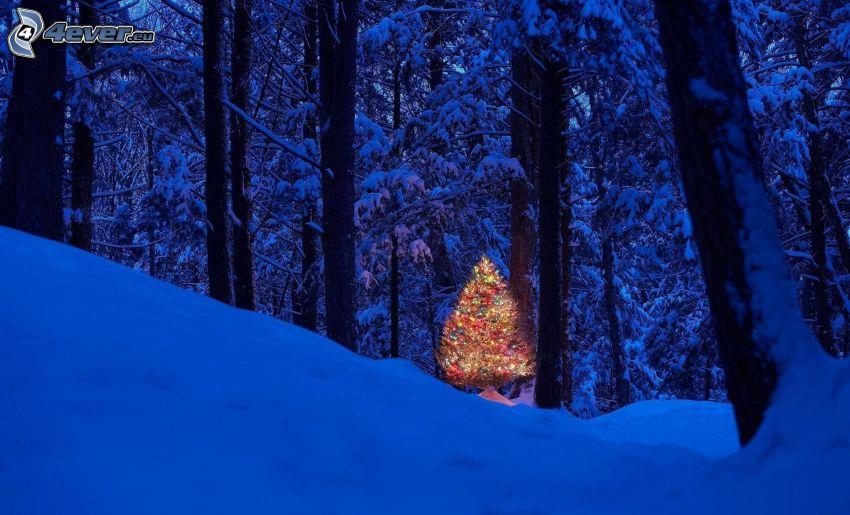 julgran, snöig skog