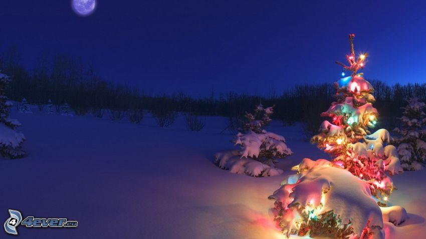 julgran, snöigt landskap, natt