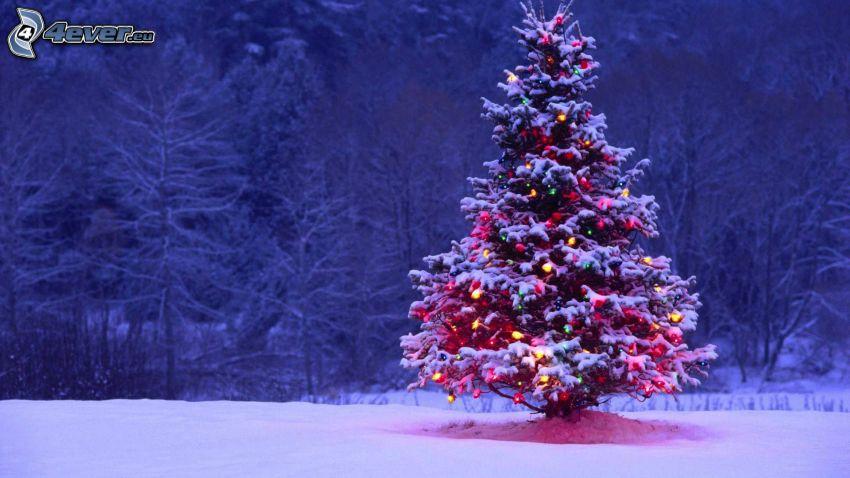 julgran, snöklädda träd