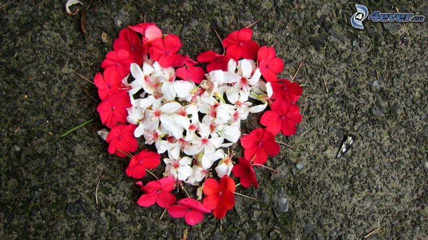 hjärta, kronblad
