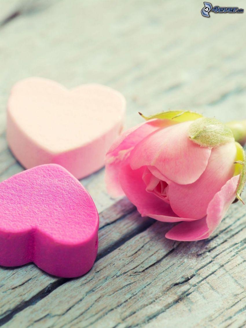 hjärtan, rosa ros