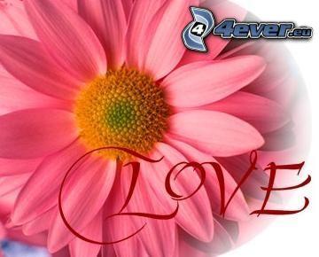 love, blomma