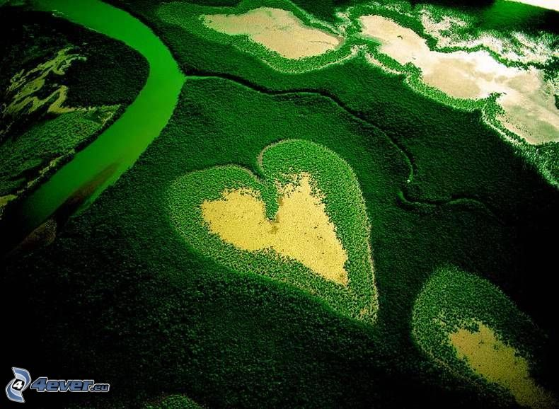 urskog, hjärta, flygfoto, natur