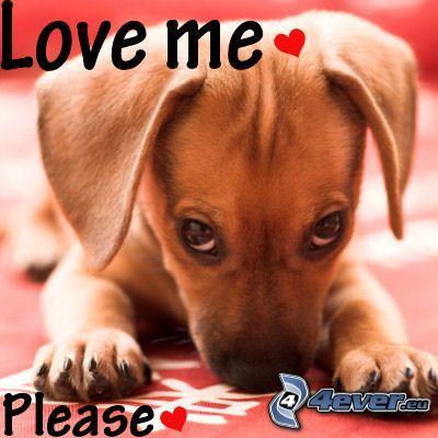 valp, kärlek, hjärta, hundblick