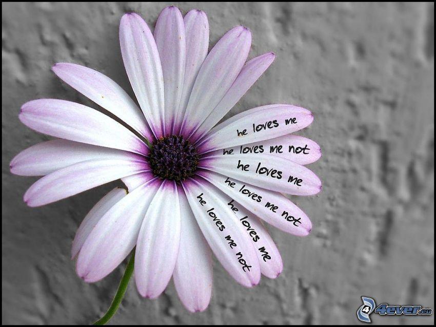 blomma, älskar - älskar inte
