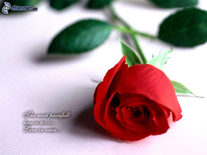 ros, kärlek, besvikelse