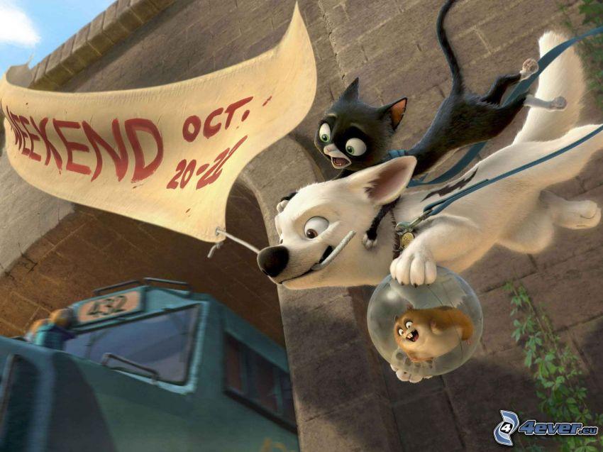 Bolt, hund och katt, hamster