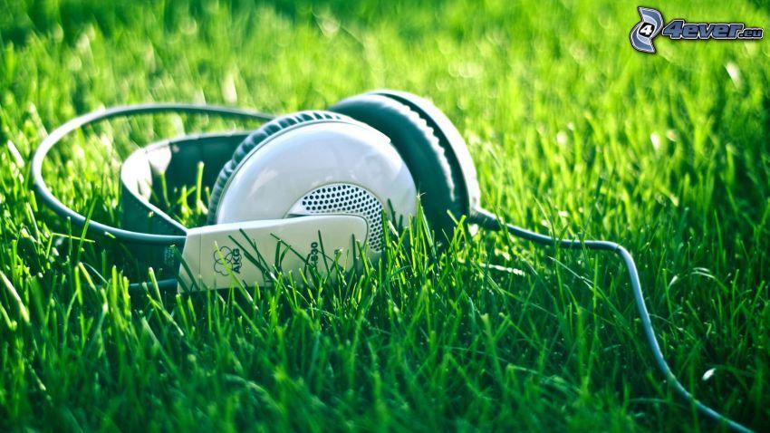 hörlurar, gräs